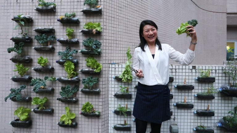 Daisy Tam and her vertical allotment at Baptist University