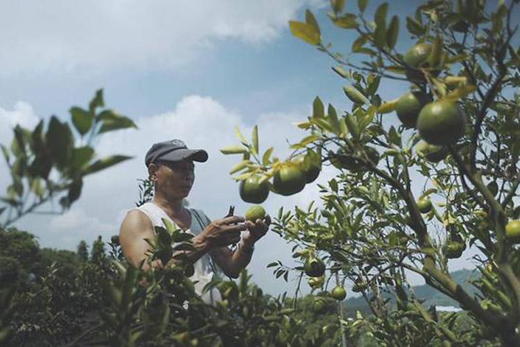 CNA-farmer